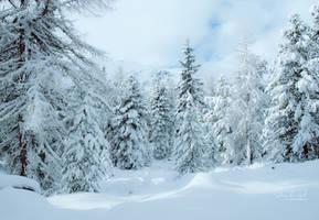 Winter Wonderland by Fleur-de-Noel