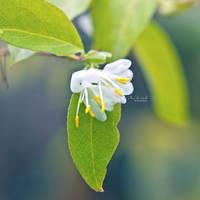Breath Of Spring by Fleur-de-Noel