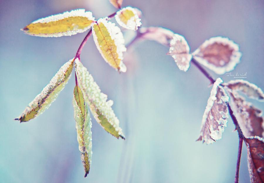 Hello Winter by Fleur-de-Noel