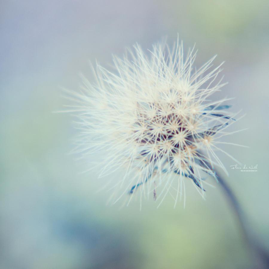 Soft As Snow by Fleur-de-Noel