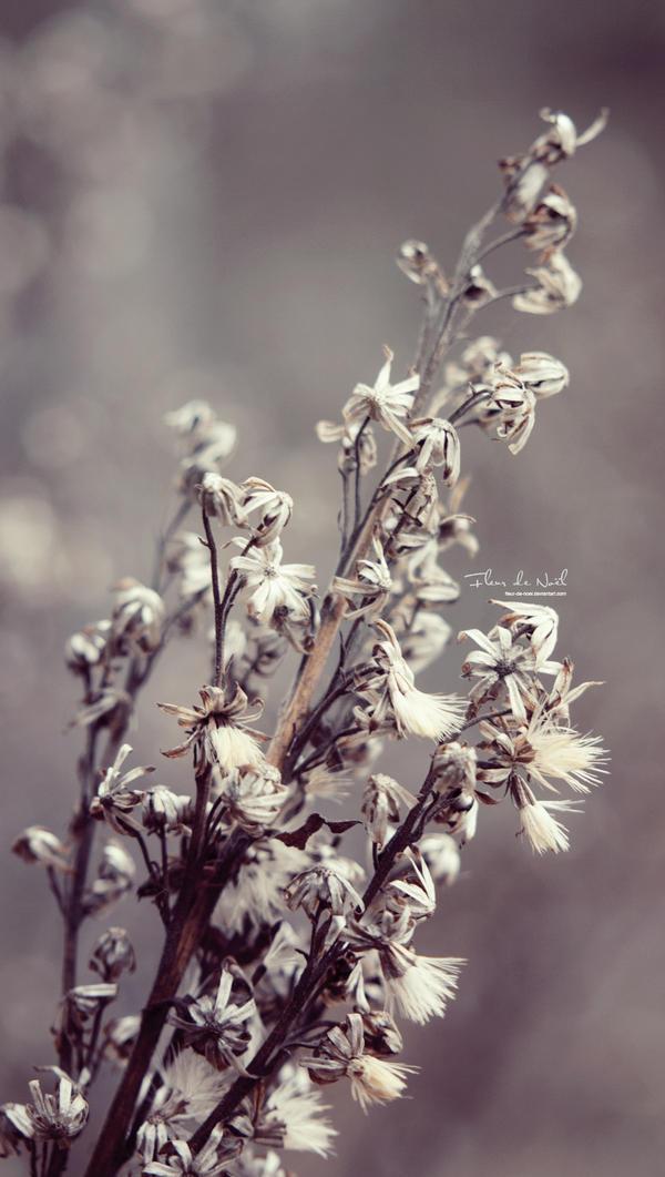 Wild And Free by Fleur-de-Noel