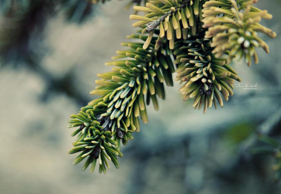 Forest Is Calling by Fleur-de-Noel