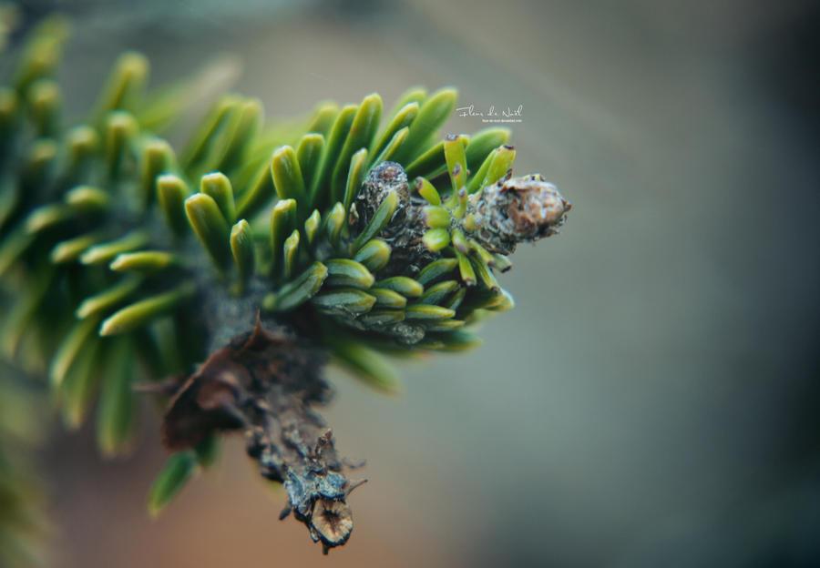 Breathless by Fleur-de-Noel