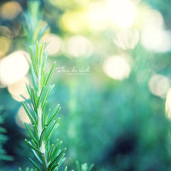 Rosemary by Fleur-de-Noel