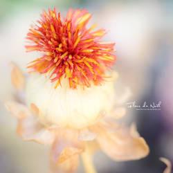 Meraki by Fleur-de-Noel