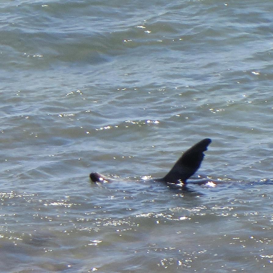 Sea lion near the shore by Tarturus