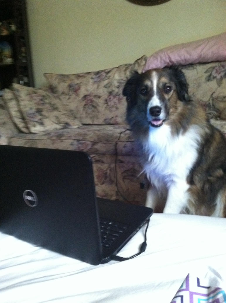 On the internet, no one knows you're a dog by Cosmic--Chaos