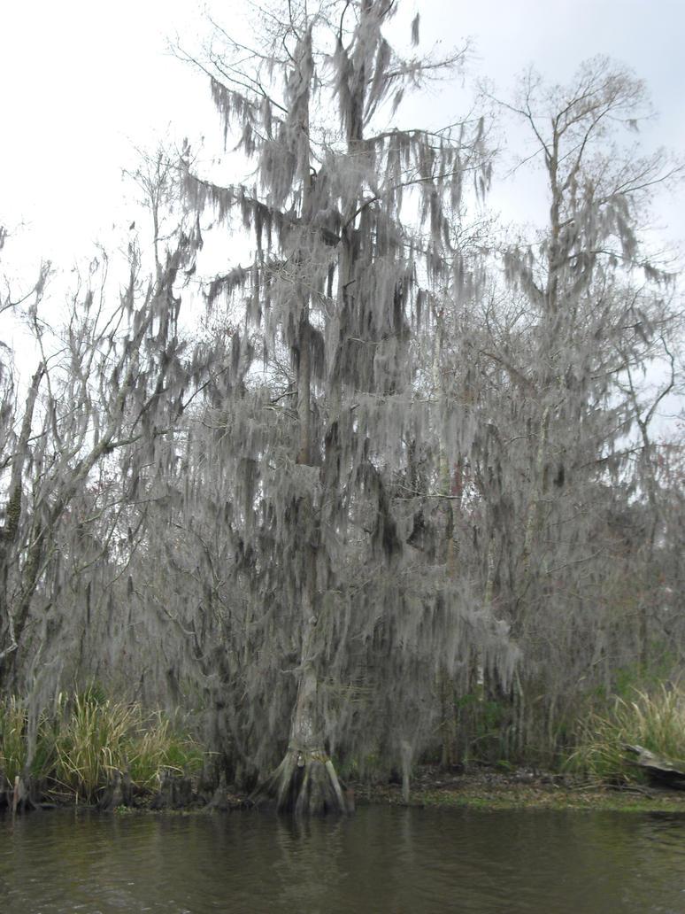Spanish Moss Tree by Cosmic--Chaos