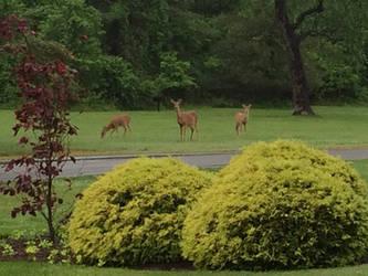 Three Deer by Cosmic--Chaos