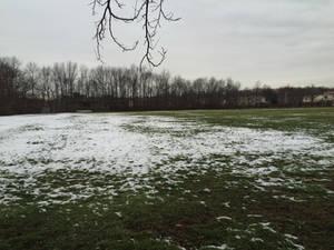 Bleak Field