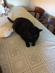 Grumpy Black Cat by Cosmic--Chaos