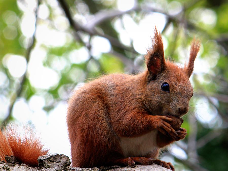 going nuts by Bauscheborzel