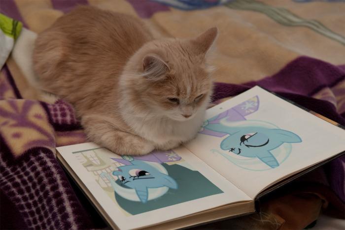 Mitten's Kittenhood Obsession by FuzzyyPanda