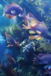 coloured sea by sharpi