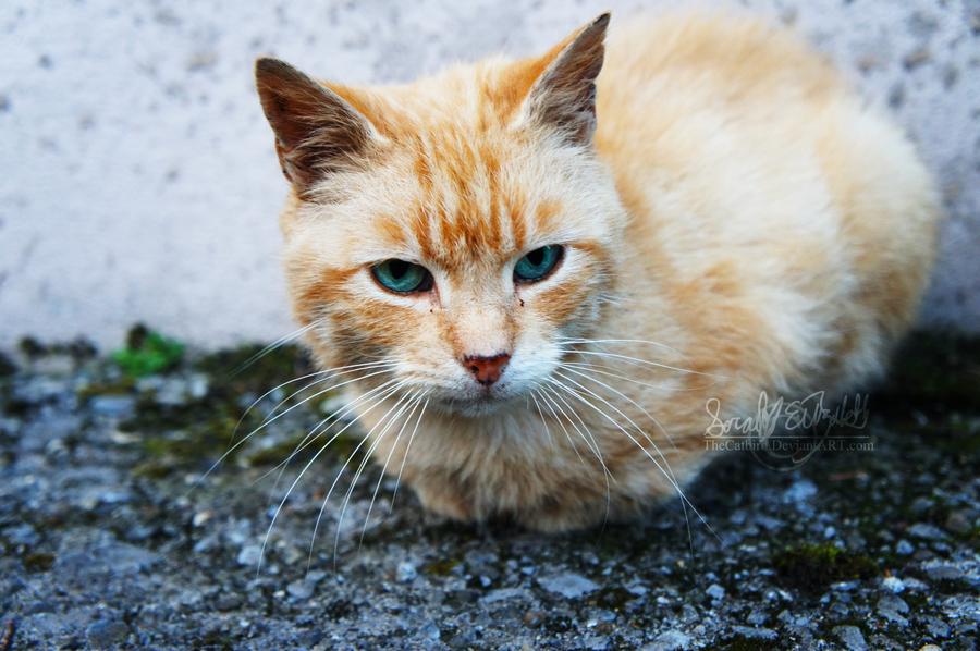 Cat Scratch Eye Quotes. QuotesGram