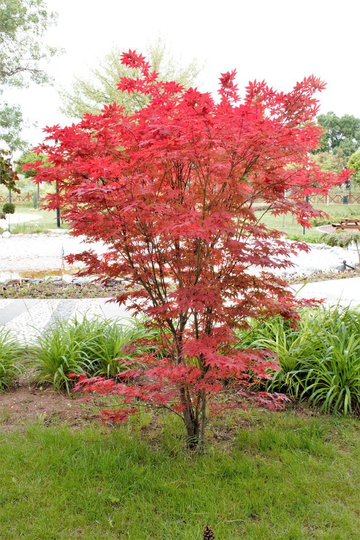 Red Tree by sevket
