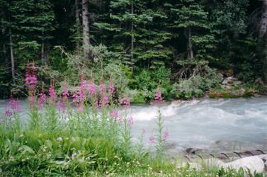 Memories: Lake Louise 3