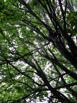 Rainy Tree
