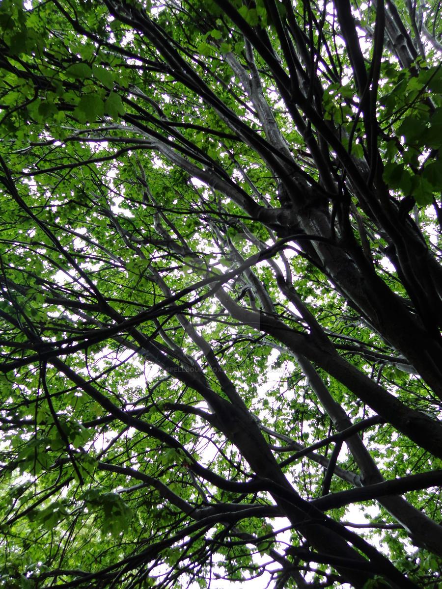 Rainy Tree by SpellboundFox