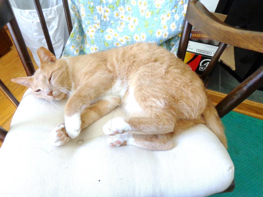 Cat Nap Alphonse by SpellboundFox