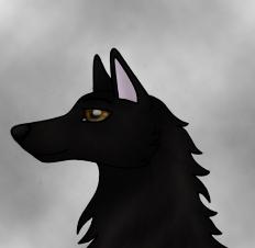 Wolf Head by AdrianneM
