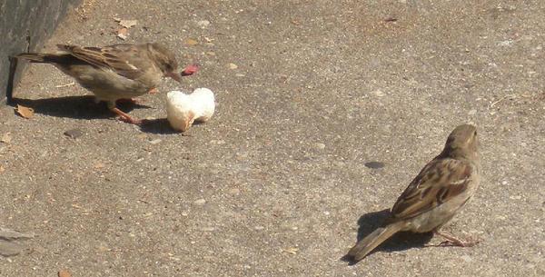 Birdies pt 1 by ladylor