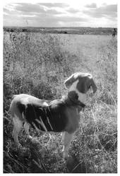 Dottie the Dog03 by nibbler-photo