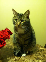 2Claws Loves Red Roses