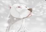 Lumimyrskypitti