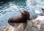 Sea Lion Saying Hello