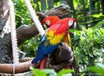 Twin Parrots