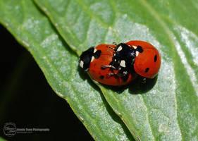 Love Bugs by sweetcivic