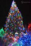 Holiday Lights Tree