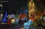 Holiday Lights Wonderland