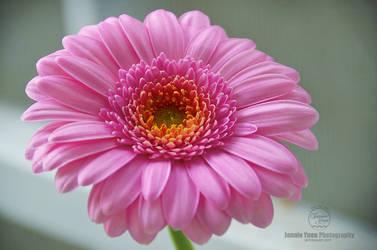 Beautiful Pink by sweetcivic