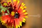 Bee by sweetcivic