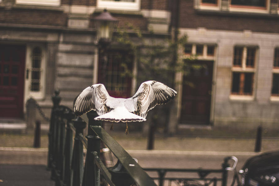 Bird Flying by icmb94