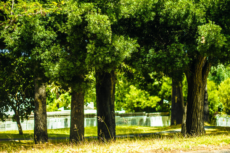 Casual African Trees by icmb94