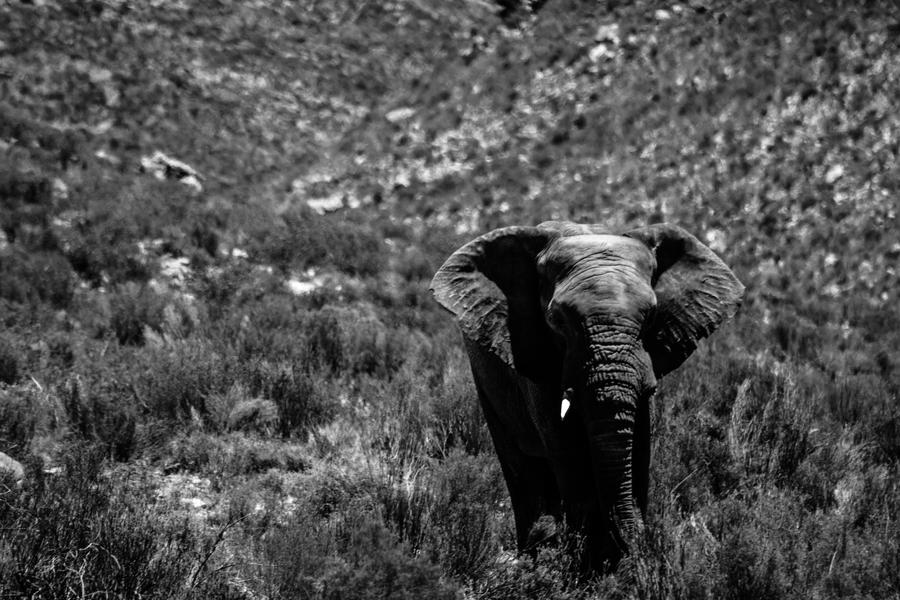 Elephant by icmb94