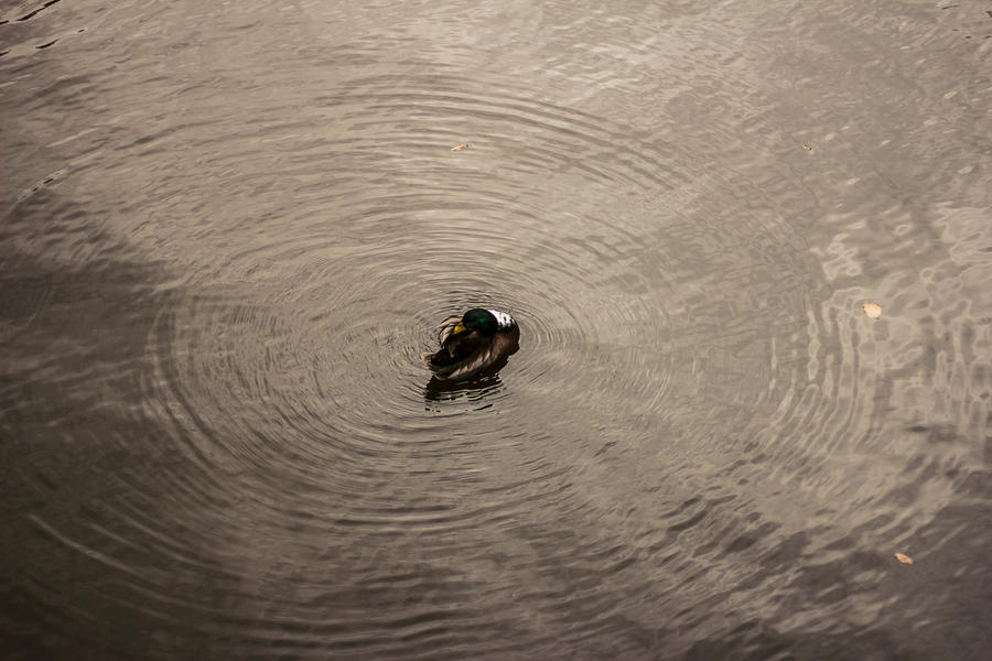 Bird in Amsterdam canal by icmb94