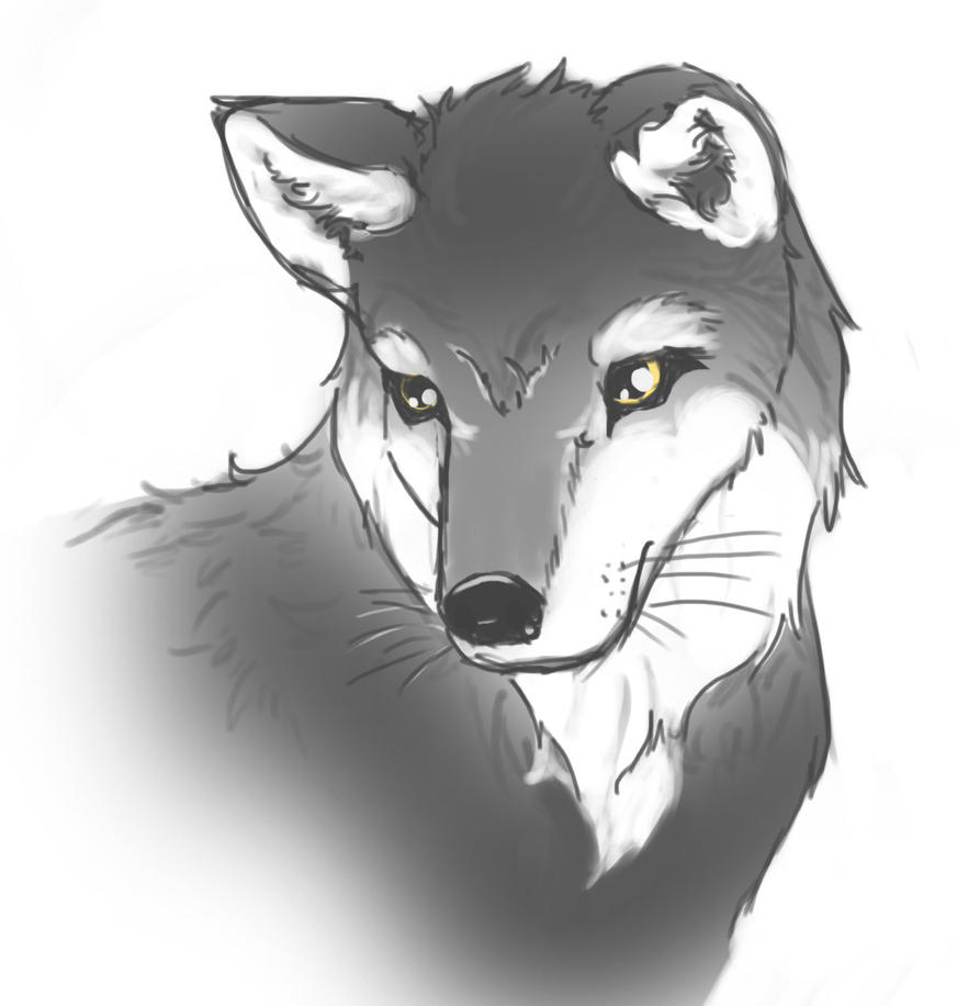 Sketch 5-15 Wolf by Geomancing