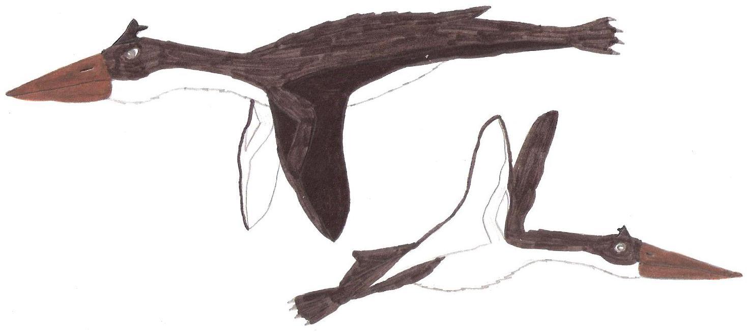 Stereotypic Penguin Pterosaur