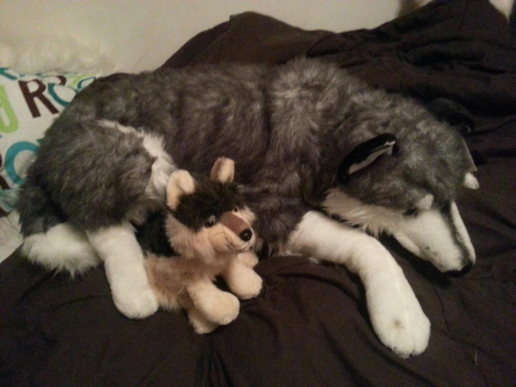 plush huge husky and wolf for sale by xoxoxivoryxoxox on deviantart. Black Bedroom Furniture Sets. Home Design Ideas