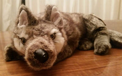 Plush SAle: DITZ DESIGNS WOLF by xoxoxivoryxoxox