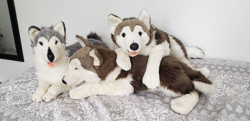 EJ classic  collection plush husky pack by xoxoxivoryxoxox