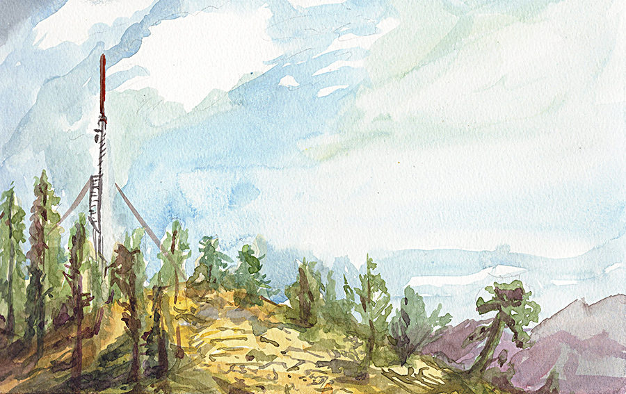 Sequoia Watercolor by AncientSources