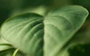 Green Heart by Mimado