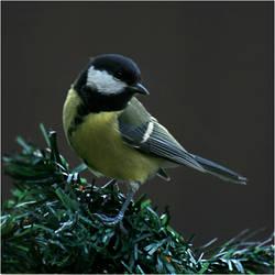 November Bird