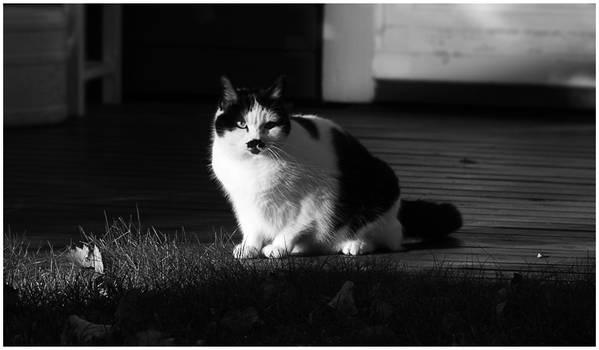 BW-Edition: Cat Next Door
