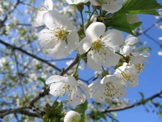 White Flower Tree II by Mimado